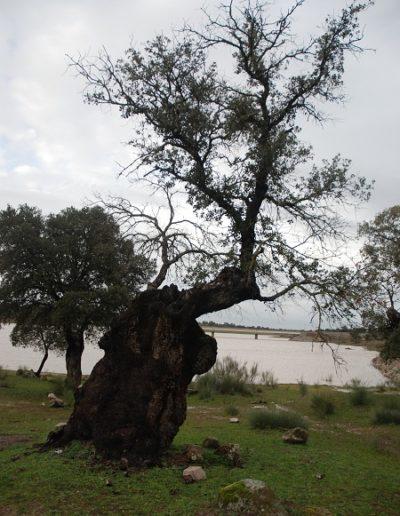 pantano_de_la_colada-10.jpg